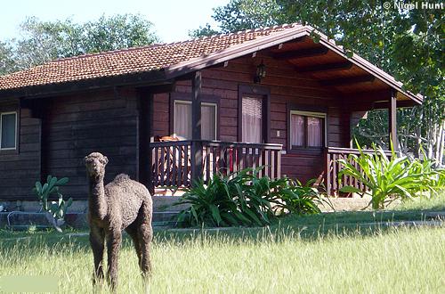 Gaviota Villa Cayo Saetia